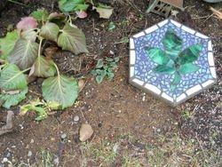 Shade garden beginnings