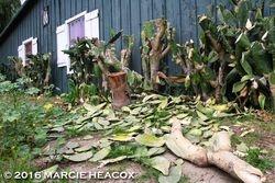 Cactus Carnage