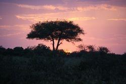 Sunset ar Masai Mara Reserve