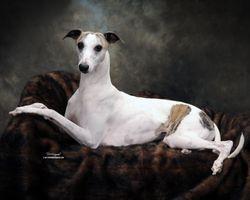 Lacey - Portrait