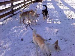 Muji, Chloe, Bootsie & George