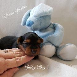 Gabby Boy 2