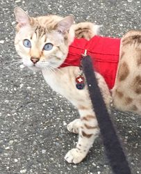 Ash, Twig's brother in his new red jacket