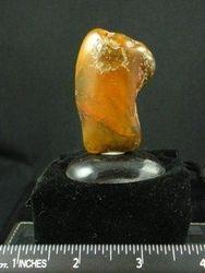 Baltic Amber  09-00043
