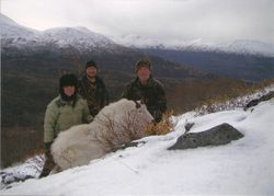 Mountain Goat on Kodiak