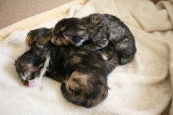 3 kittens, Belle's first litter.