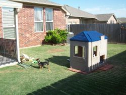 Doggy play house in back yard
