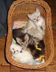PRECIOUS KITTENS ENJOYING THEIR CRADLE...