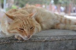 Orange Kitty 2