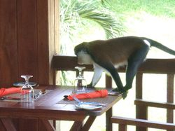 A visitor to the restaurant at the Belmont Estate