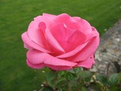 Powderham Castle, Devon - Rose Garden