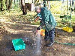 Washing the tubers