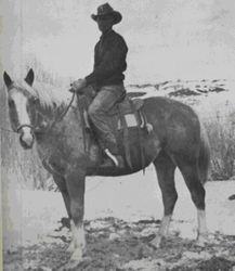 Saladin, foaled 1932