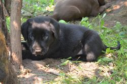 One of the black males at 6 weeks