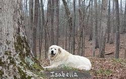 Isabella, dam