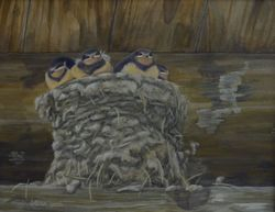 "Pleasant Surprise - Barn Swallow Chicks (9 by 12"" acrylic on canvas)"