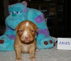 Aries at 17 days