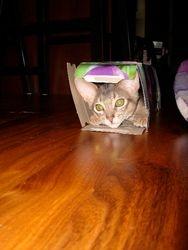 Peek-a-Boo Oliver