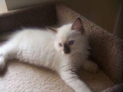 Gigi is now 9 weeks