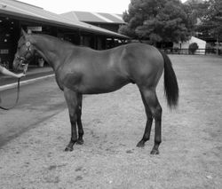 2005 Yearling Sales-Preemo