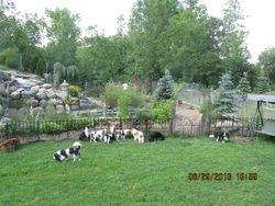 Doggies in the yard.