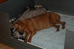 Calypso 8 weeks sleeping