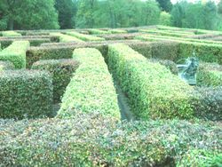 Maze at Palace of Scone