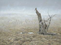 "Grassland Harmonies (30 by 40"" oil on canvas) $2800.00"