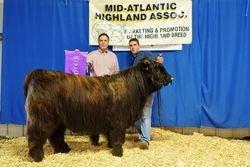 Grand Champion Bull MAHA 2015