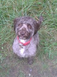 Like my wet doggy style?