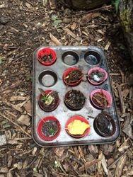 Delicous mud cakes!
