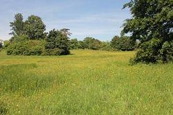 buttercups in the meadow 1st June 17