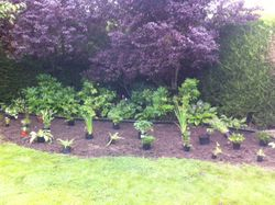 Positioning plants in the shady border