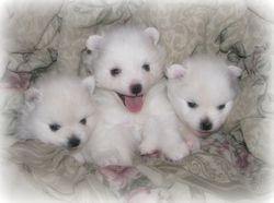 Toto & Koda's babies