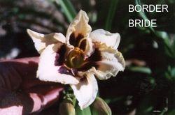 BORDER BRIDE  $8