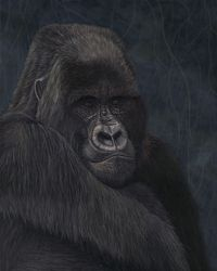 "Keeper of Faith - Mountain Gorilla (24 by 30"" oil on canvas) In Private Collection"
