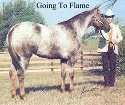 Going To Flame