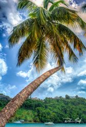 Bent Palm