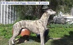 Ziggy 8 years & 2 days old