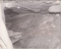 Inside a Snake Den 1986