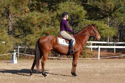 Hannah & Costly, first dressage test!