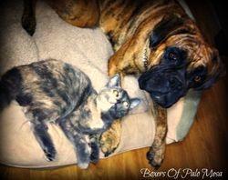 Saga With Her Kitten Cammie 2012