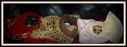New pouches, happy girls