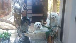 Chobi, Coco, & Rocco
