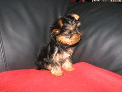 Male Pup 2