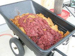 Pomace and pressed grape mash.