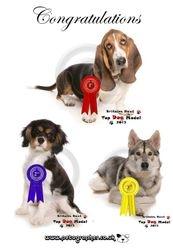 Britains Top Dog Model 2013