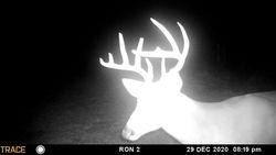 Great buck!