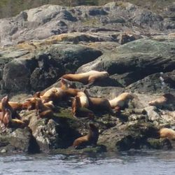 in spring the Sea lions come by