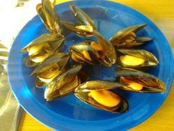 MUSSELS,SOUTH AFRICA